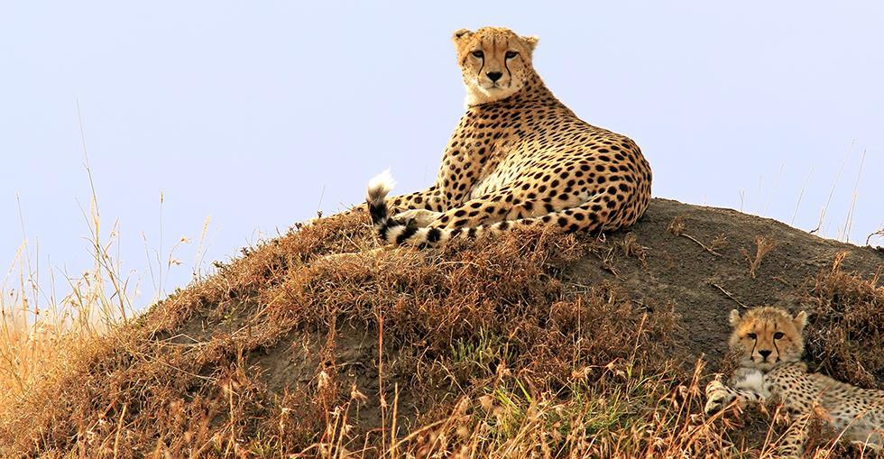safarihero2