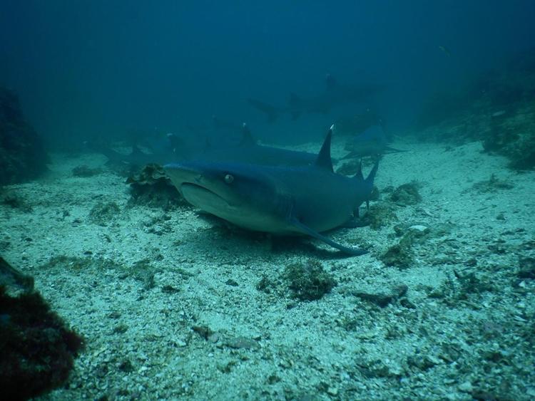 established dive center costa - 2